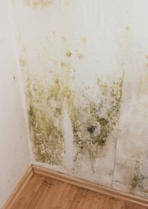 mildewed walls | mold removal minneapolis mn