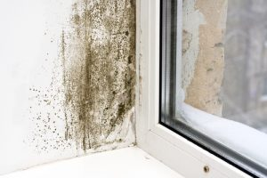 mold damage removal