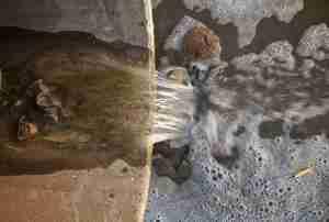 water damage repair st paul mn