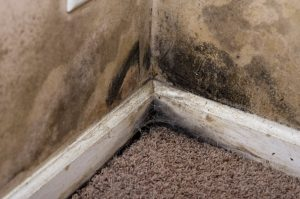 mold damage minneapolis