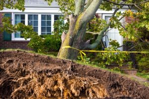 storm damage cleanup, storm damage repair